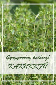 gyógynövények gyűjtése pikkelysömörre recept)