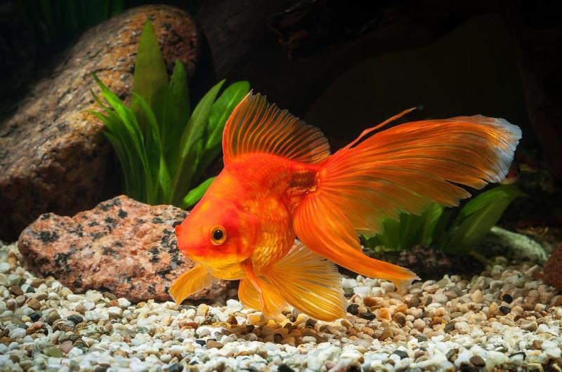 aranyhalak hasán vörös foltok vannak pikkelysömör minden kezelése az ókortól a modernig