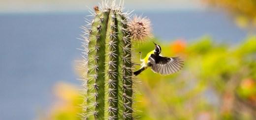 kaktuszok pikkelysömör kezelése)