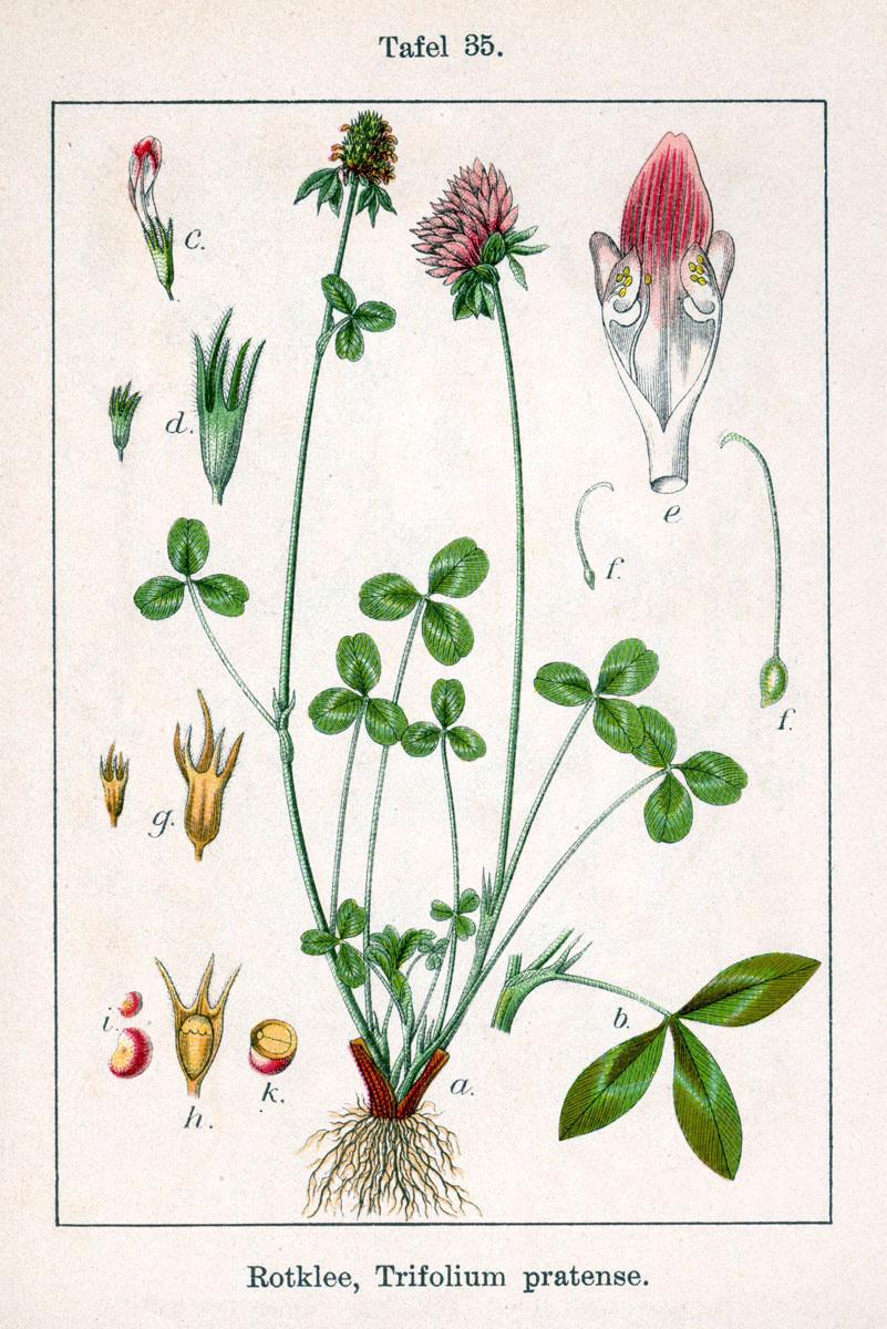 növények pikkelysömörének kezelése