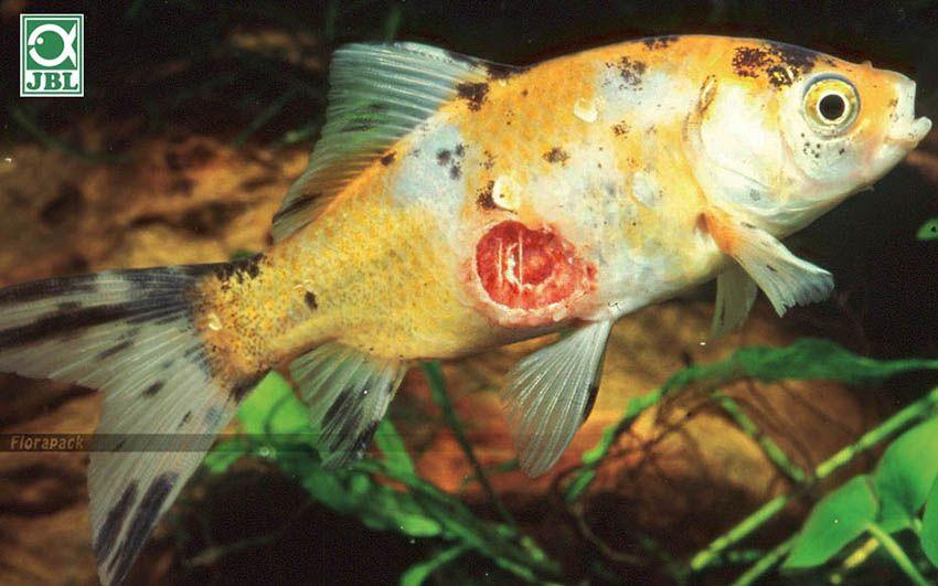 A leggyakoribb halbetegségek