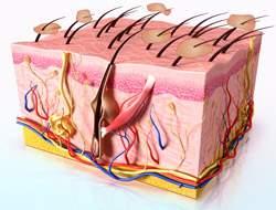 népi gyógymódok a szeborreás pikkelysömörhöz foltok a bőrön vörösek az idegektől